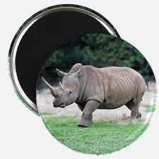 Rhinoceros with Huge Horn Magnet