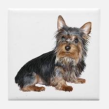 Silky Terrier (gp2) Tile Coaster
