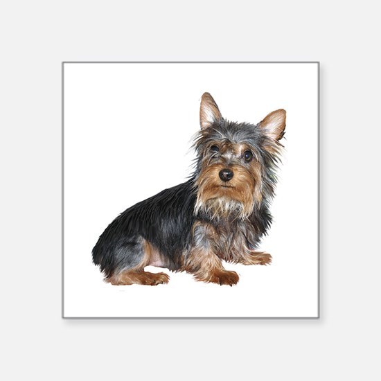 "Silky Terrier (gp2) Square Sticker 3"" x 3"""
