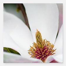 """White Magnolia Macro Square Car Magnet 3"""" x 3"""""""