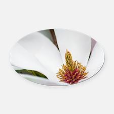 White Magnolia Macro Oval Car Magnet