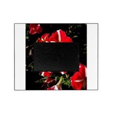 Candy Striped Petunias Picture Frame