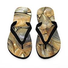Clams Flip Flops