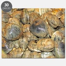 Clams Puzzle