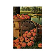 Basket of Peaches - Levi Wells Pr Rectangle Magnet