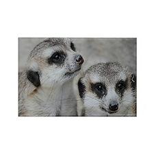 adorable meerkats 02 Magnets