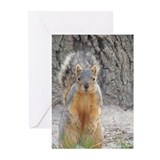 Squirrel Greeting Cards (10 Pack)