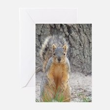 Squirrel Greeting Cards