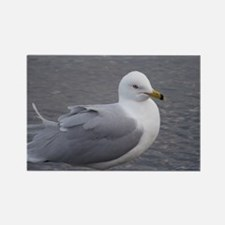 Seagull Magnets