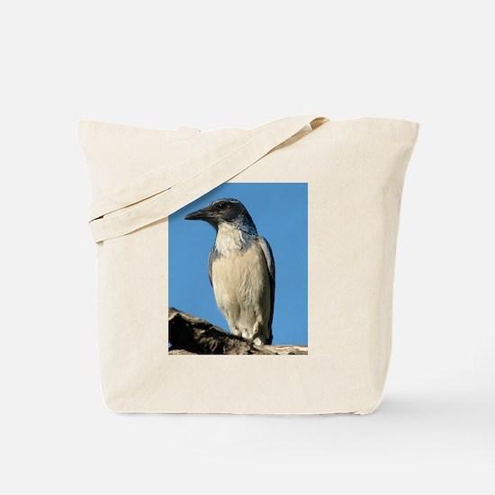 Beautiful Western Scrub Jay Tote Bag