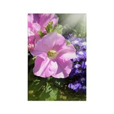 Pink petunia in the sunshine Rectangle Magnet
