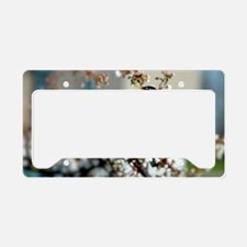Robin in Cherry Tree License Plate Holder