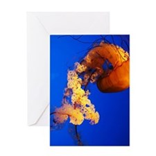 Jelly2 Greeting Card