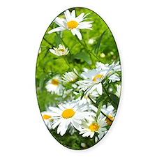 Beautiful daisies Decal