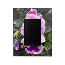 Raindrop Pansy Picture Frame