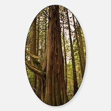 Inveraray Forest in Scotland Decal