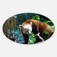 Adorable Climbing Red Panda Decal