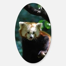 Sweet Red Panda Bear Decal
