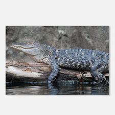 Alligator  Postcards (Package of 8)