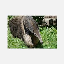 Giant Anteater Rectangle Magnet