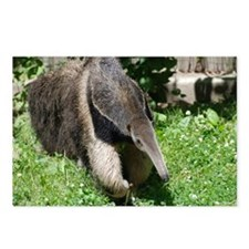 Giant Anteater Postcards (Package of 8)