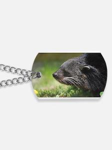 Binturong Profile Dog Tags
