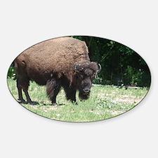 Grazing Buffalo Decal