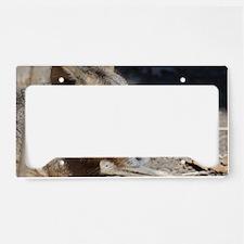 Cute Face of a Capybara License Plate Holder