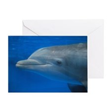 Underwater Dolphin Greeting Card