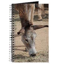 Long Eared Donkey Eating Hay Journal