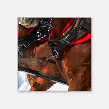"Horses Square Sticker 3"" x 3"""