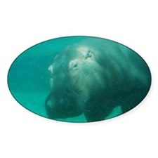 Hippo Under the Water Decal