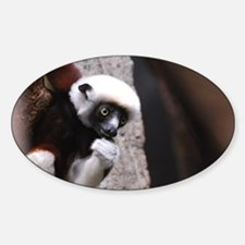 Adorable Safika Lemur Decal