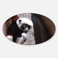Adorable Safika Lemur Sticker (Oval)
