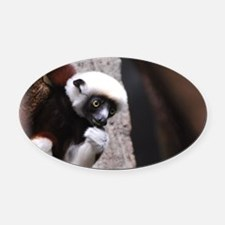 Adorable Safika Lemur Oval Car Magnet