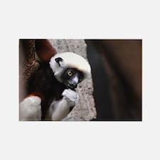 Adorable Safika Lemur Rectangle Magnet