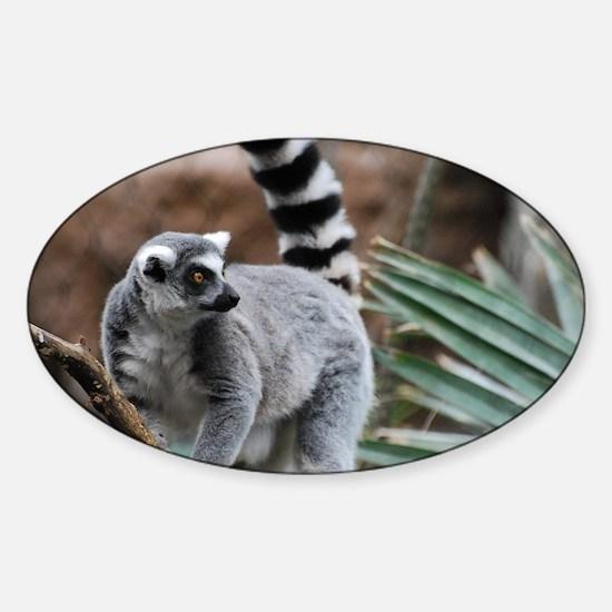 Madagascar Lemur Sticker (Oval)