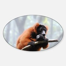 Cute Red Ruffed Lemur Decal