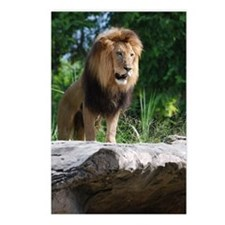 African Lion on a Cliff Postcards (Package of 8)
