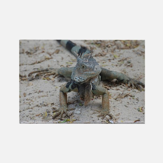 Cute Iguana Rectangle Magnet