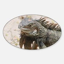 Iguana in the Tropics Decal