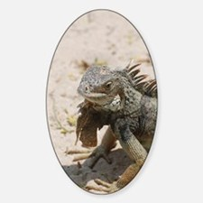 Iguana Lizard Decal