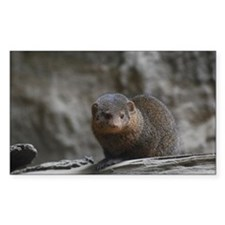 Cute Dwarf Mongoose Decal