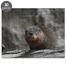 Cute Dwarf Mongoose Puzzle