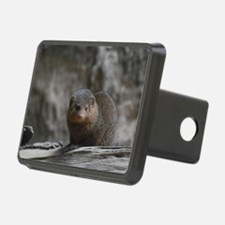 Cute Dwarf Mongoose Hitch Cover