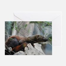 Ringtailed Mongoose Greeting Card