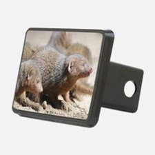 Mongoose Licking His Nose Hitch Cover