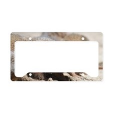 Mongoose Licking His Nose License Plate Holder