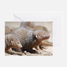 Mongoose Licking His Nose Greeting Card