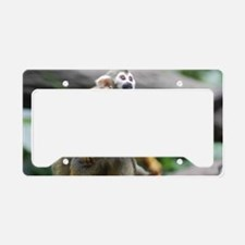Pair of Squirrel Monkeys License Plate Holder